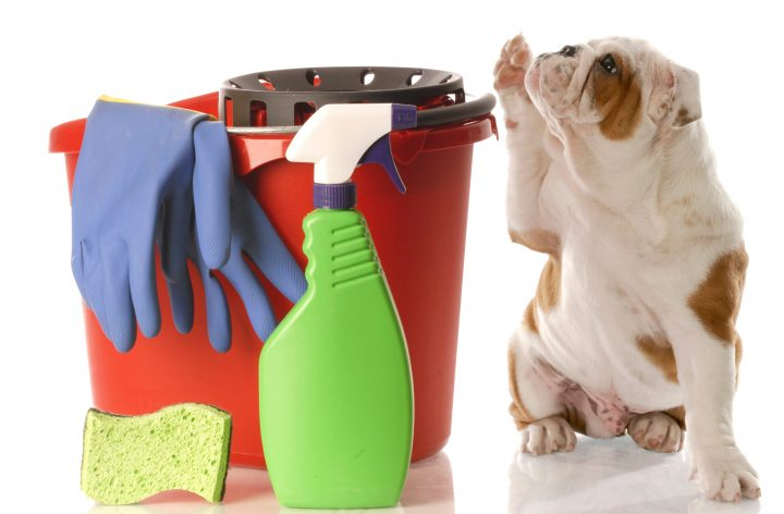 bulldog-with-cleanup-supplies-istock_000012497535large-copy